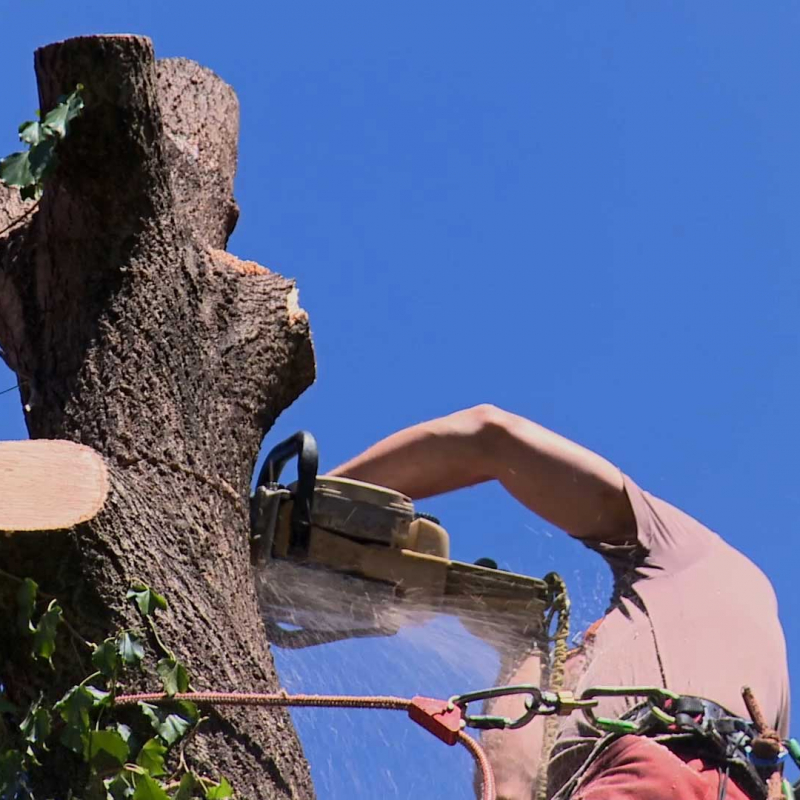 Baumfällarbeiten